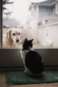 Dog looking into glass door at cat