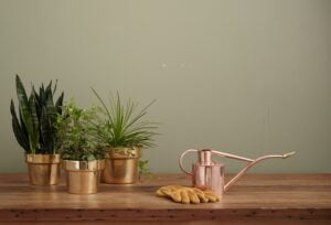 Three house plants in copper pots on a shelf with a watering can